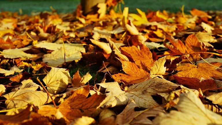 Leaf Waste Collection