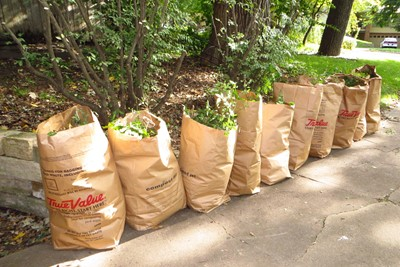 Curbside Leaf Waste Collection Guidelines